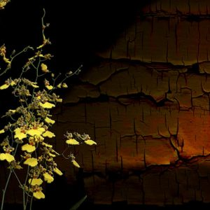 Image of Flowers Duet Light Painting