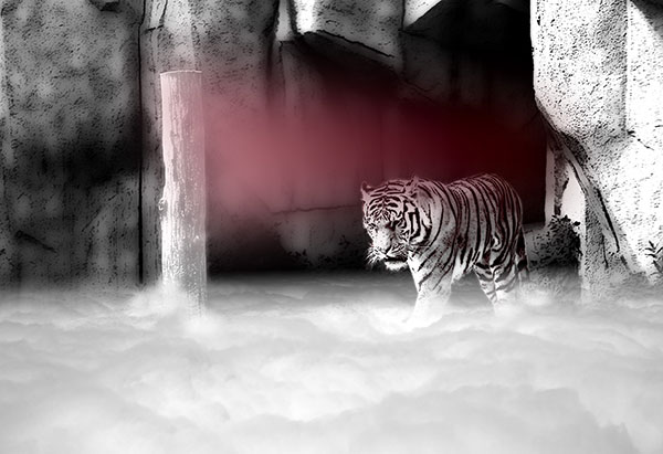 Image of Lair of the Peppermint Tiger Light Painting