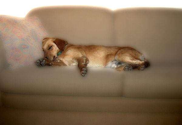 Image of Let Sleeping Dogs Lie Light Painting