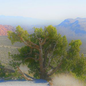 Image of Red Rock Canyon Tree Light Painting