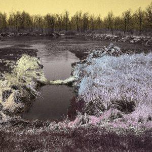 Image of Watermarsh Light Painting